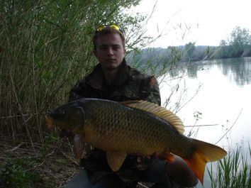 Common Carp River Ebro Spain