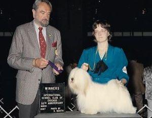 Snowball winning major at the International Kennel Club show