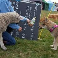 Meeting the neighbours at the shows
