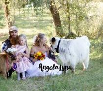 weddings with miniature cows for sale