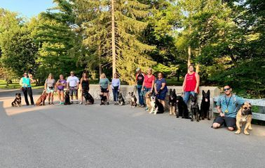 Obedience clients on a pack walk