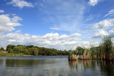 PWLC wetland