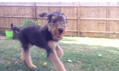 puppy visits, toileting, Northampton, Milton Keynes, Stony Stratford