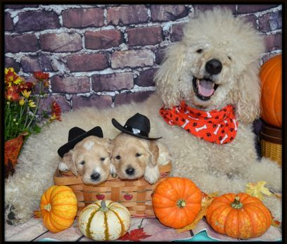 Grandpa of puppies