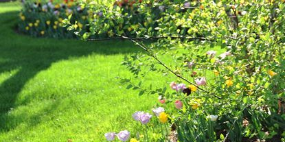 Let your lawn be the talk of the neighborhood