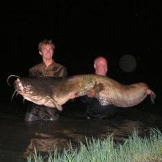 Catfish in the River Ebro Spain
