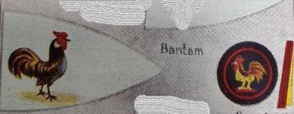 Bantam Patrol