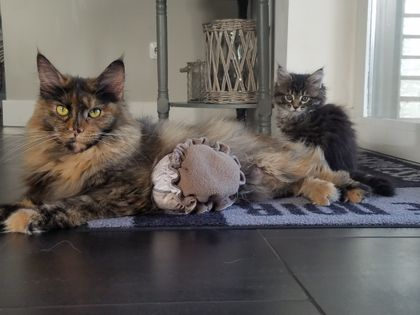 Floortje en Amber