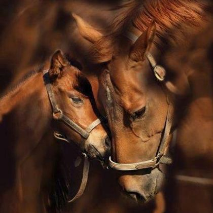 A Mother and  Her Foal