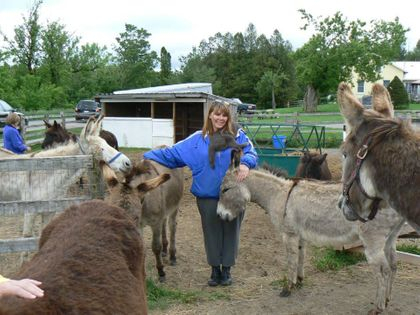 Donkeys waiting for Animal Reiki