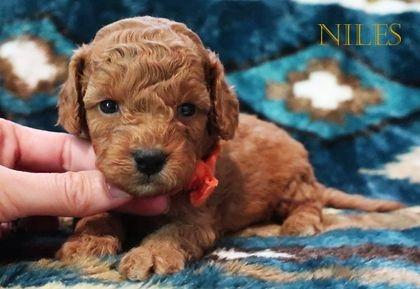 Effie has chosen Niles