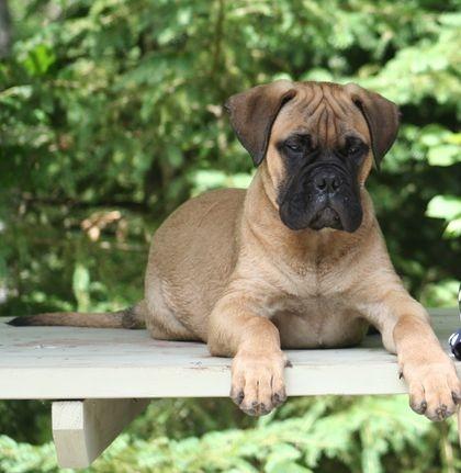 Tyson 4 months