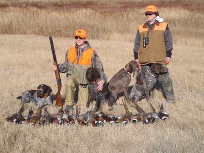 Amber and Tiny with our friends Drahthaar hunting in SD!