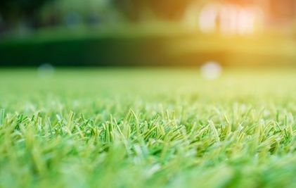 beautiful artificial grass why?