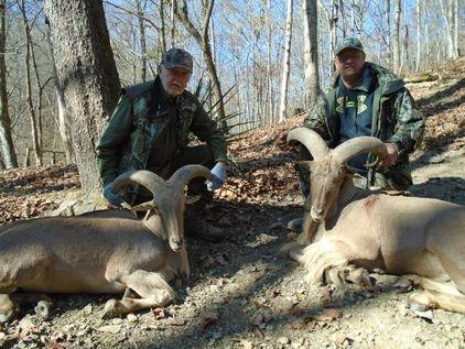 Audads, Russian Boar, wild boar, rams , exotics