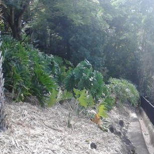 Sugar Cane Mulch. (No Seeds)