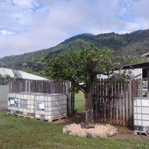 Annual Citrus Pruning.