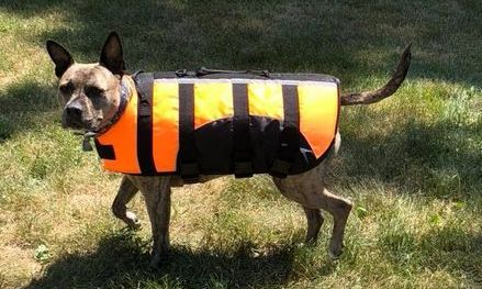 dog life jackets available