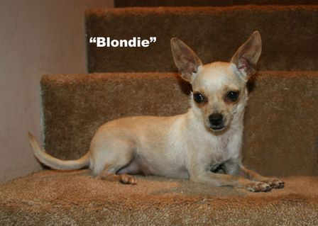 Blondie, Cream Female