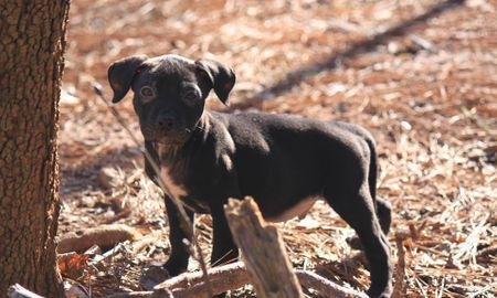 Breeders Of American Pit Bull Terrier We Have Good Quality