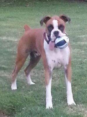My dog Chester loves to play football. I can play with your pet during my pet siting.
