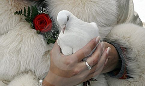 White Doves Symbolize Love,Peace,Fidelity,Prosperity and Good Luck