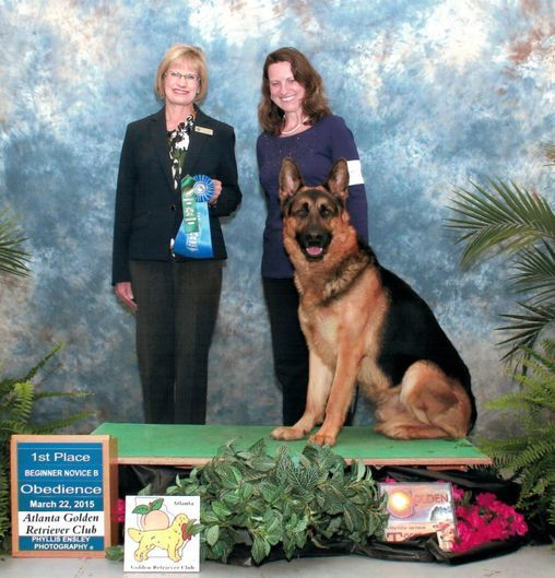 Stud Dog Service Dog Never Say Never Judge CD BN RN CGC CGCA CGCU OFA hip heart elbow eyes