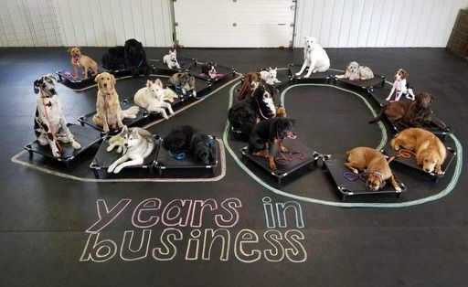 Twenty years in the Dog Training business