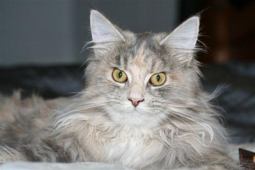 Lady Kleopatra