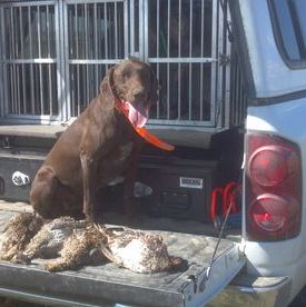 Cora with sharptail Grouse in Montana!