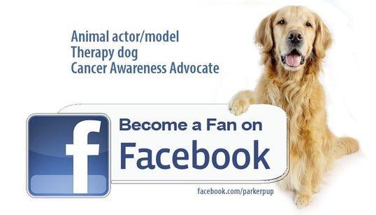 ParkerPup Become A Fan Follow on Facebook Banner