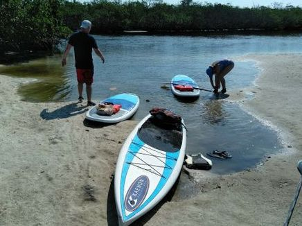 stand up paddleboard (SUP) keewaydin magrove eco tour