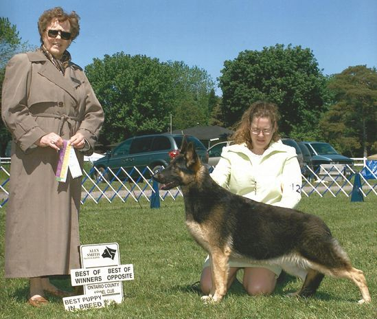Jordan appleridge GSD special best puppy