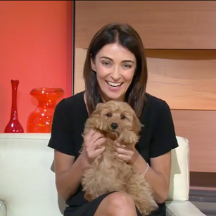 cavoodle puppies today show