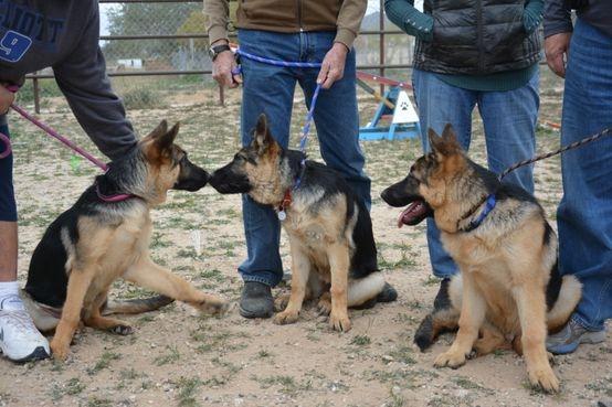 Karona, Lexi and Lear