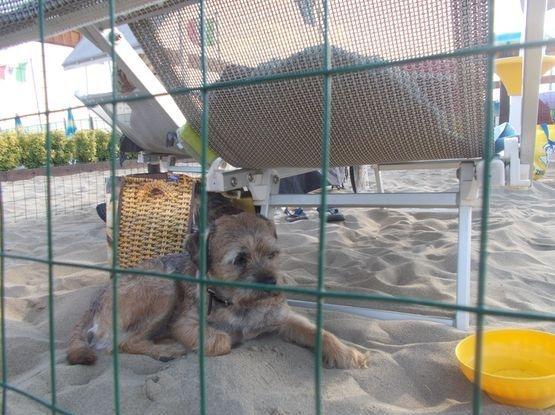 Vakantiehuis italie hond mee - Bagno marechiaro viareggio ...