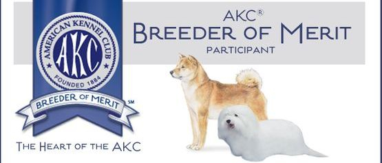 AKC Breeder Of Merit, top quality pups