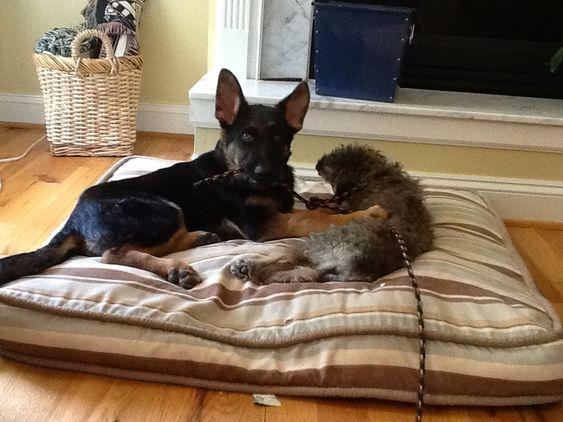 dog bed best friends