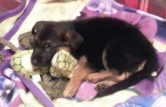 puppy love sleeping time