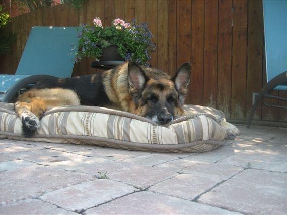 I love my dog bed