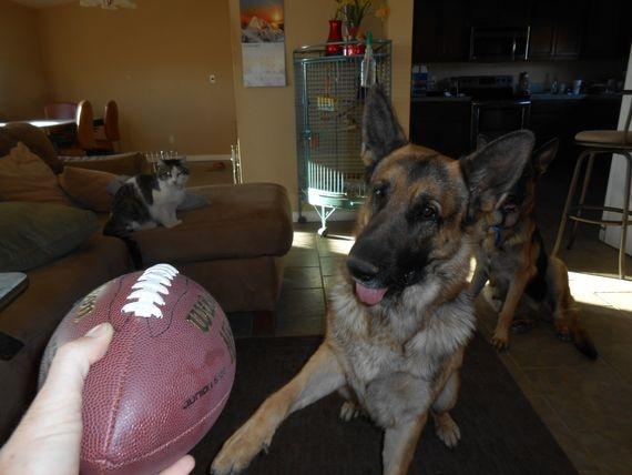 Drako really wants the football
