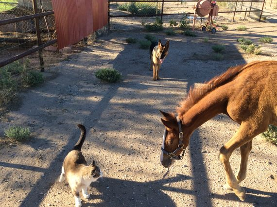 Muffin (cat) Chief (colt) and Sassy
