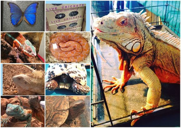 2021 Hilliard Early Summer Reptile Show