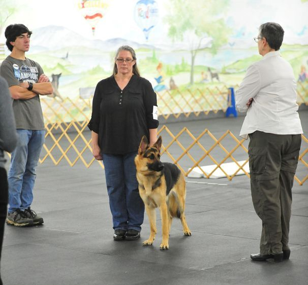 Appleridge Loni obedience dog akc
