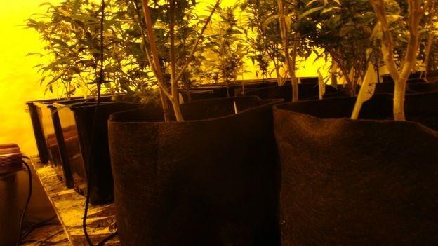 indoor grow with good