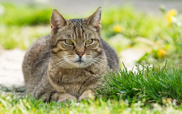 Cats are not at fault, they are just being cats
