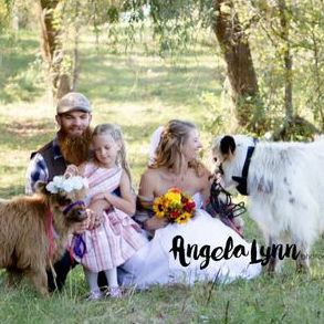 Mini cows for sale/ wedding photo shoot