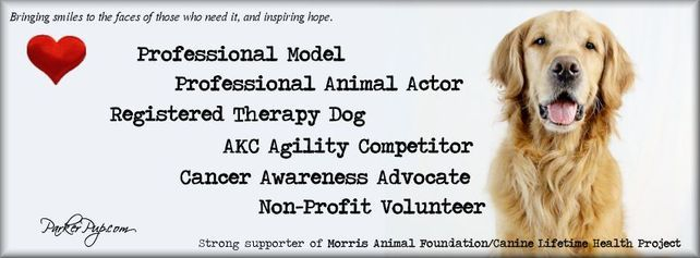 ParkerPup Header - actor, model, therapy dog, crisis response, cancer awareness advocate