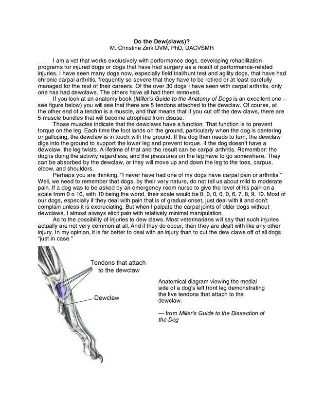 DewClaw Explanation by a Veterinarian