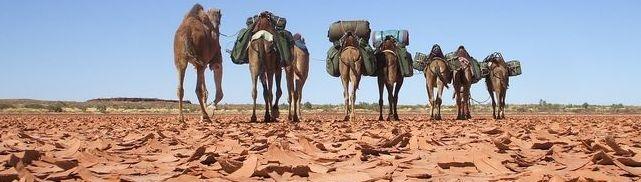 Camel Safari and Expedition